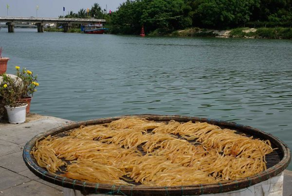 Sun dried rice noodles in Hoi An